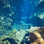 Unterwasserwelt im Thingvellir N.P. bei 2° Wassertemperatur